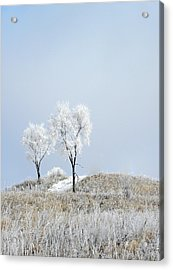 Winter Frost Acrylic Print by Julie Palencia