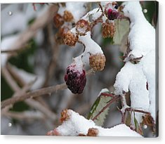 Winter Fruit Acrylic Print by Rand Swift