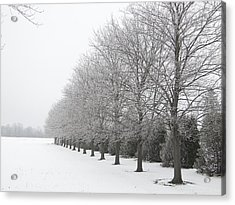 Acrylic Print featuring the mixed media Winter Hoar Frost On Trees by Bruce Ritchie