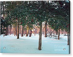 Winter Holly Acrylic Print by George Oze