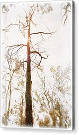 Winter In The Woodlands Acrylic Print by Erica Horsley