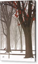 Winter In The Woods Acrylic Print by Tom York Images