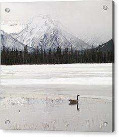 Winter Landscape, Banff National Park Acrylic Print by Keith Levit