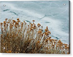 Winter Life Acrylic Print