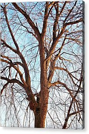 Acrylic Print featuring the photograph Winter Light by Chalet Roome-Rigdon