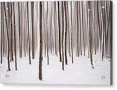 Winter Acrylic Print by Mircea Costina Photography