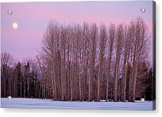 Winter Moon Acrylic Print by Marie-Dominique Verdier
