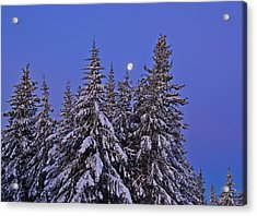 Winter Night Acrylic Print by Michele Cornelius