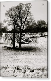 Acrylic Print featuring the photograph Winter Oaks by John Colley