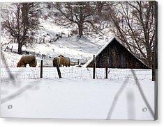 Winter On The Farm Acrylic Print by Carolyn Postelwait