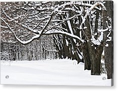 Winter Park With Snow Covered Trees Acrylic Print by Elena Elisseeva