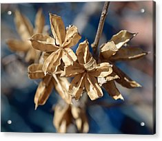 Winter Remainder Acrylic Print by Lisa Phillips