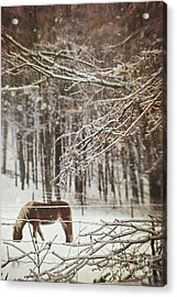 Winter Scene With Horse Grazing In Wooded Pasture Acrylic Print by Sandra Cunningham