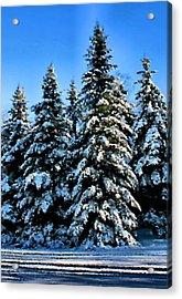 Winter Sentinels Acrylic Print by Kristin Elmquist