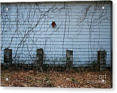 Winter Shelter Acrylic Print by Gregory Dragan