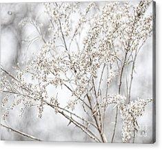 Winter Sight Acrylic Print