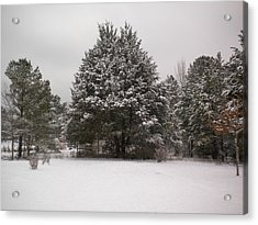 Winter Snow Acrylic Print by Tessa Priddy