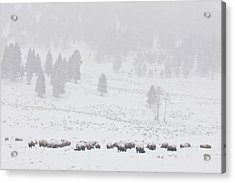 Winter Storm Acrylic Print by D Robert Franz