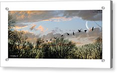 Winter Sunset  Silhouette Acrylic Print by Brian Wallace