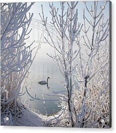 Winter Swan Acrylic Print by E.M. van Nuil