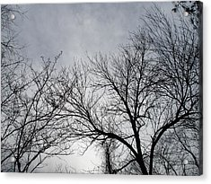 Winter Tree II Acrylic Print by Suzanne Fenster