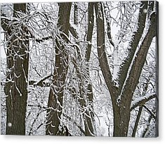 Winter Trees  Acrylic Print by Aimee L Maher Photography and Art Visit ALMGallerydotcom