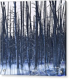 Winter Trees Acrylic Print by Artist and Photographer Laura Wrede