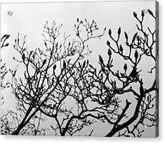 Acrylic Print featuring the photograph Winter Trees by Luis Esteves