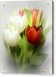 Winter Tulips Acrylic Print