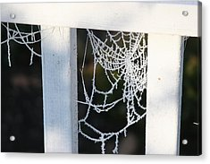 Winter Web Number Two Acrylic Print by Paula Tohline Calhoun