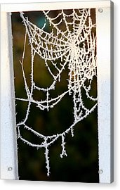 Winter Web Acrylic Print