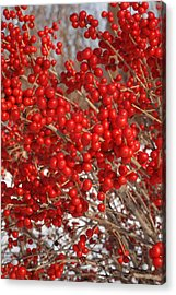 Winterberries Acrylic Print