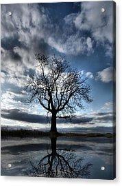 Wintering Oak Tree Acrylic Print