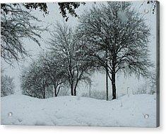 Winterlude Acrylic Print by Shawn Hughes