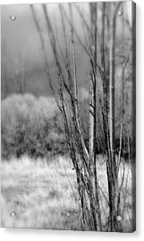 Acrylic Print featuring the photograph Winters Branch by Kathleen Grace