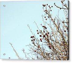 Winter's End Acrylic Print