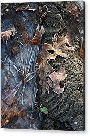 Winter's Grasp Acrylic Print by Pamela Turner