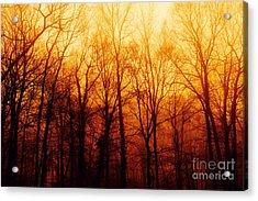 Winters Harvest Acrylic Print