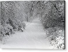 Acrylic Print featuring the photograph Winter's Trail by Elizabeth Winter