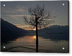Wintertree In The Evening Acrylic Print by Joana Kruse