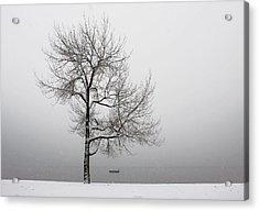 Wintertrees Acrylic Print by Joana Kruse