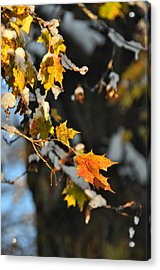 Wintery Pigment Acrylic Print by JAMART Photography