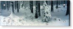 Wintry Fir Forest Acrylic Print by Ulrich Kunst And Bettina Scheidulin