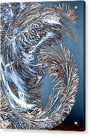 Wintry Pine Needles Acrylic Print by Will Borden