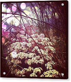 Wire & Petals... #wire #fence #petals Acrylic Print
