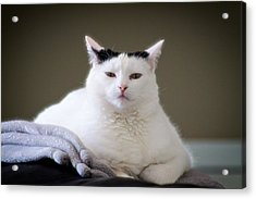 Acrylic Print featuring the photograph Wise Cat by JM Photography