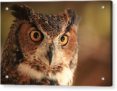 Acrylic Print featuring the photograph Wise Old Owl by Doug McPherson