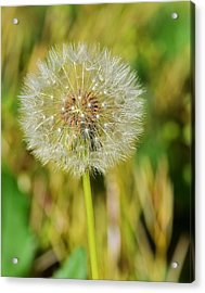 Wishes Acrylic Print by Mary Zeman