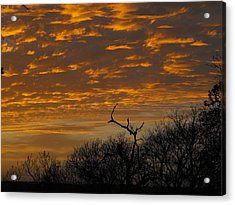 Wispy Sunset Clouds Acrylic Print by Rebecca Cearley