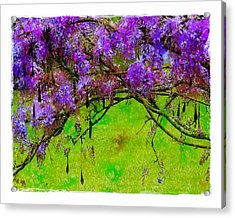 Acrylic Print featuring the photograph Wisteria Bower by Judi Bagwell